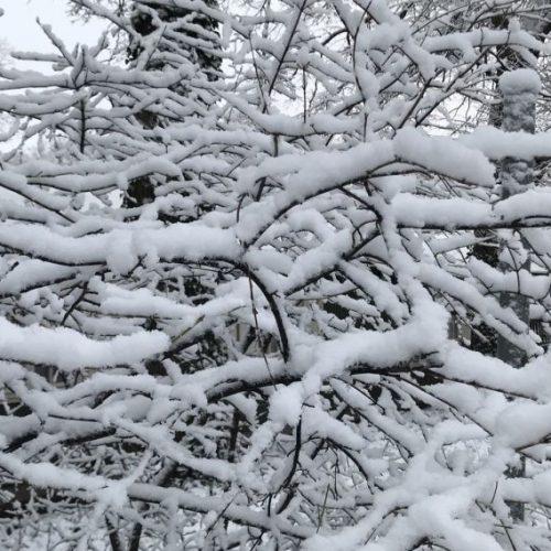 VivBon Winter 3